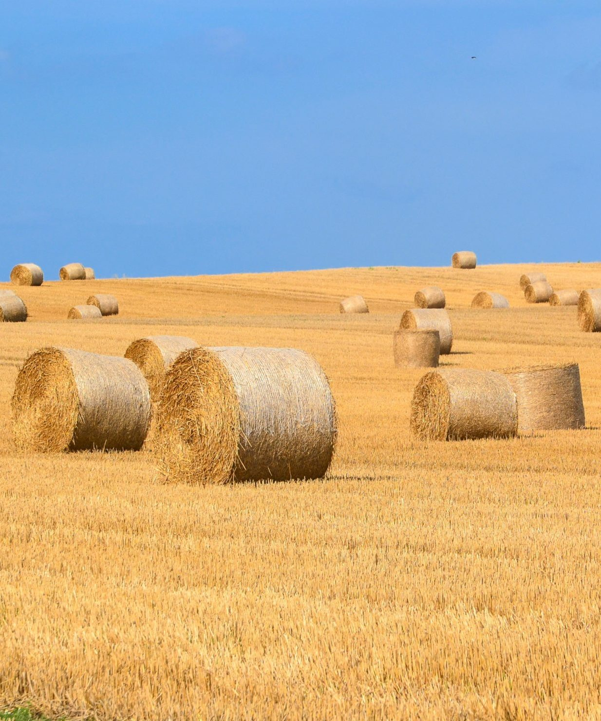 Multiple hay bales sit under a blue sky