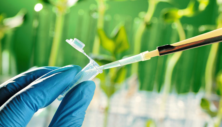 A beaker is filled in front of a green background with plants in test tubes