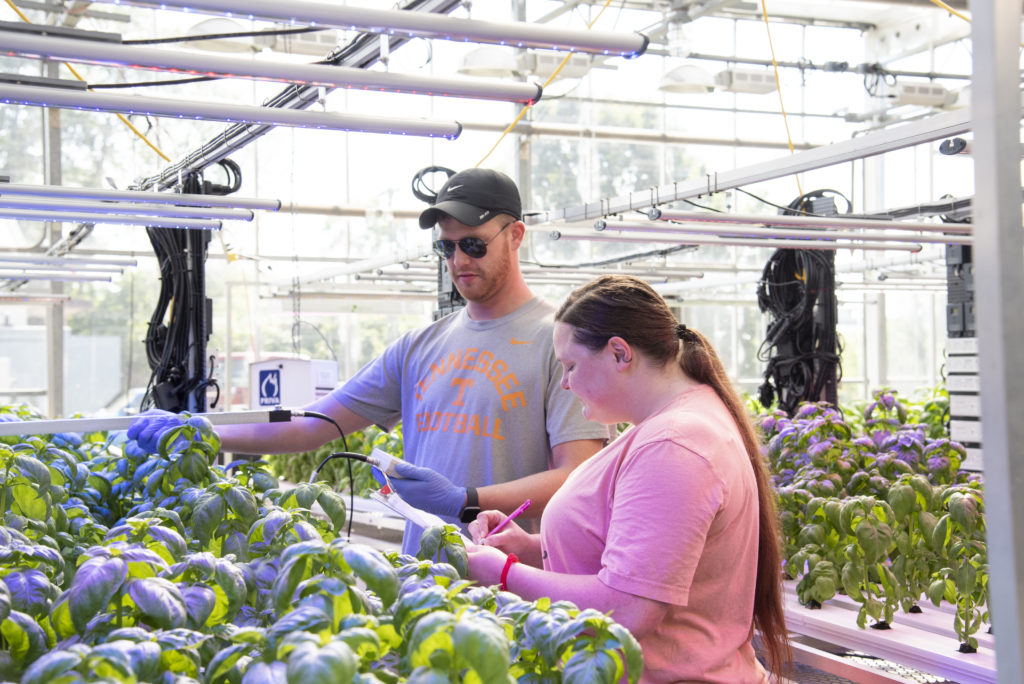 two researchers oversee data collection from hydroponic systems in the UT Greenhouses