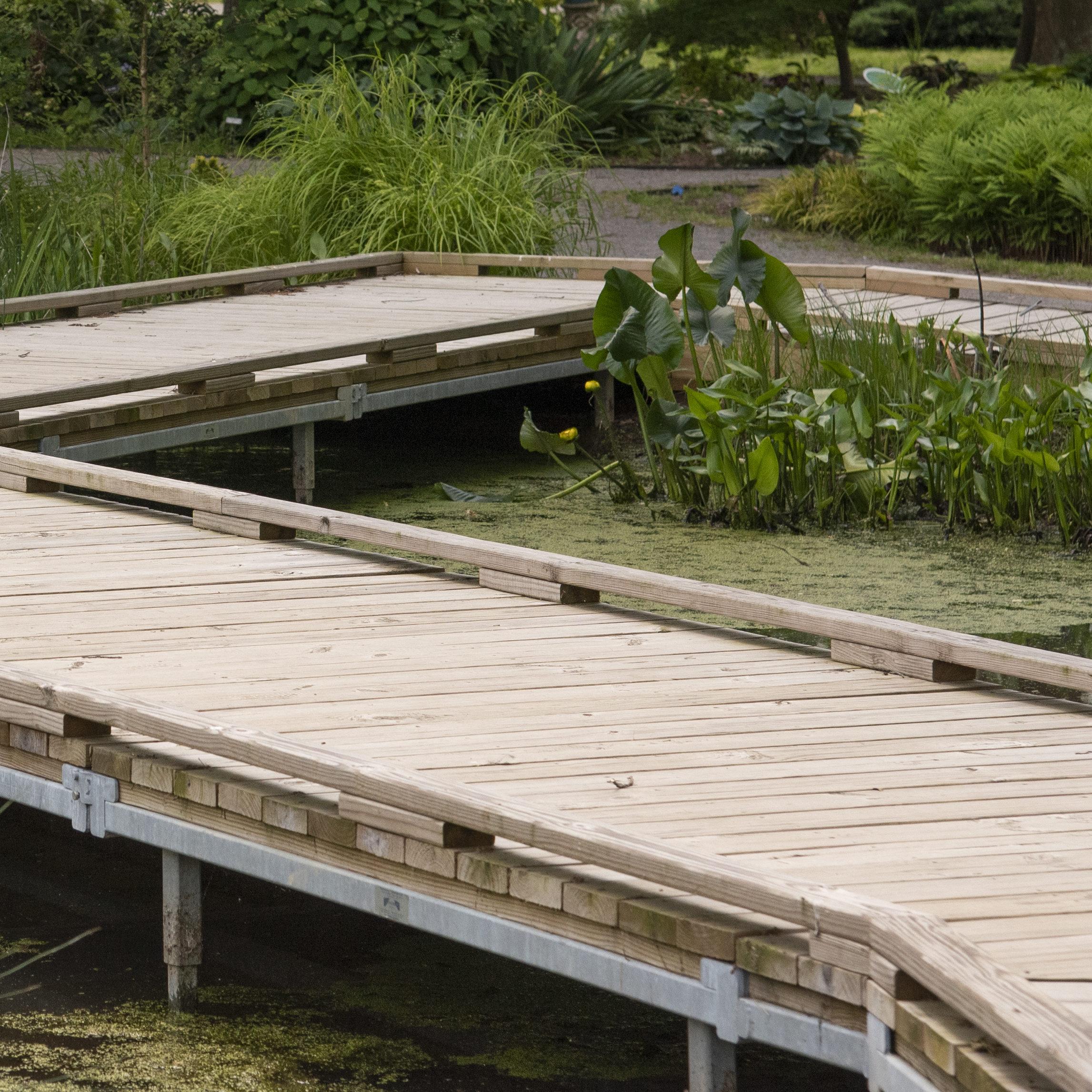 Curved bridge meanders through pond in UT Gardens