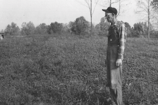 Antique black and white photo of a man standing in a forage field looking at the grasses there