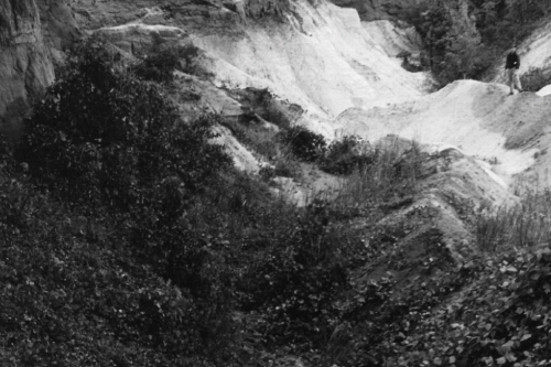 Antique black and white photo of a man standing next to a gulley covered in kudzu vine