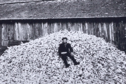 An antique black and white photo of a child sitting on a large pile of corn