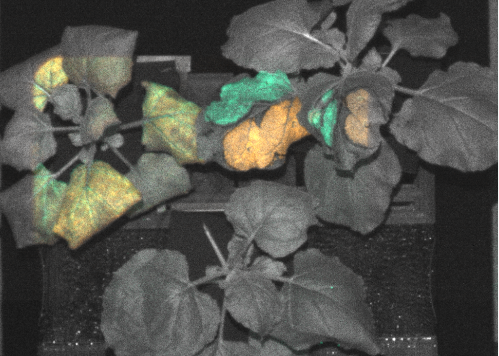 plants in black and white with some leaves glowing green in night vision