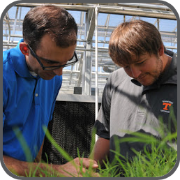 Professor Jim Brosnan examines a turfgrass sample in a greenhouse with a student